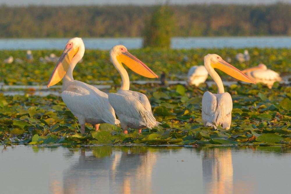 Delta Dunarii - Paradisul dintre ape - Total Reisen Delta